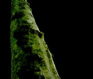 『木』には二つの命があります。